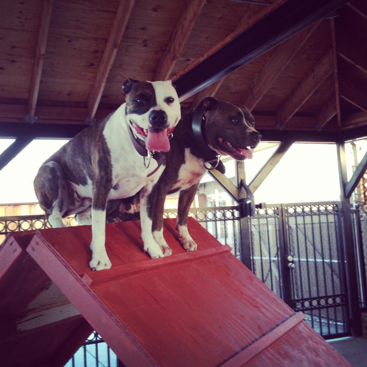 Dog Agility Training San Jose Bay Area