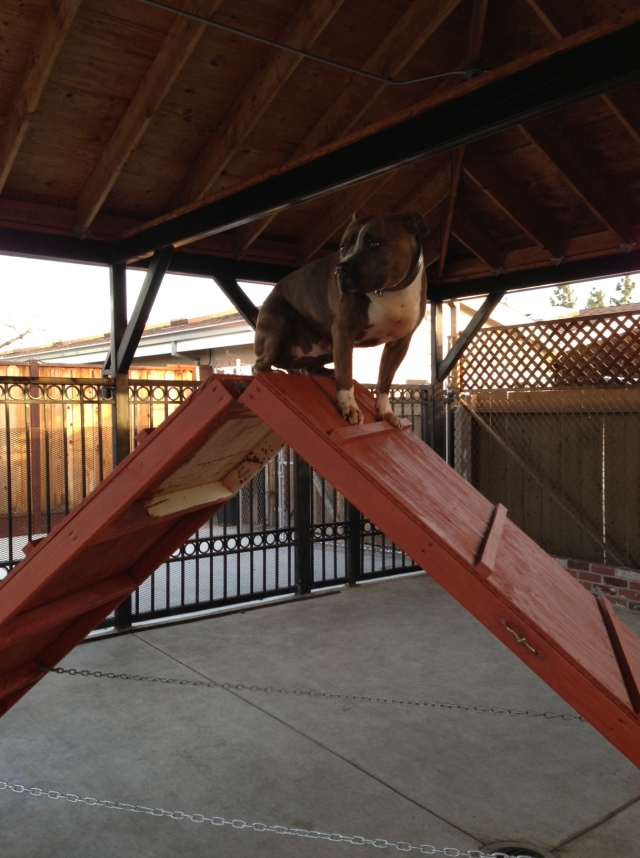 Bear primal canine sit aframe