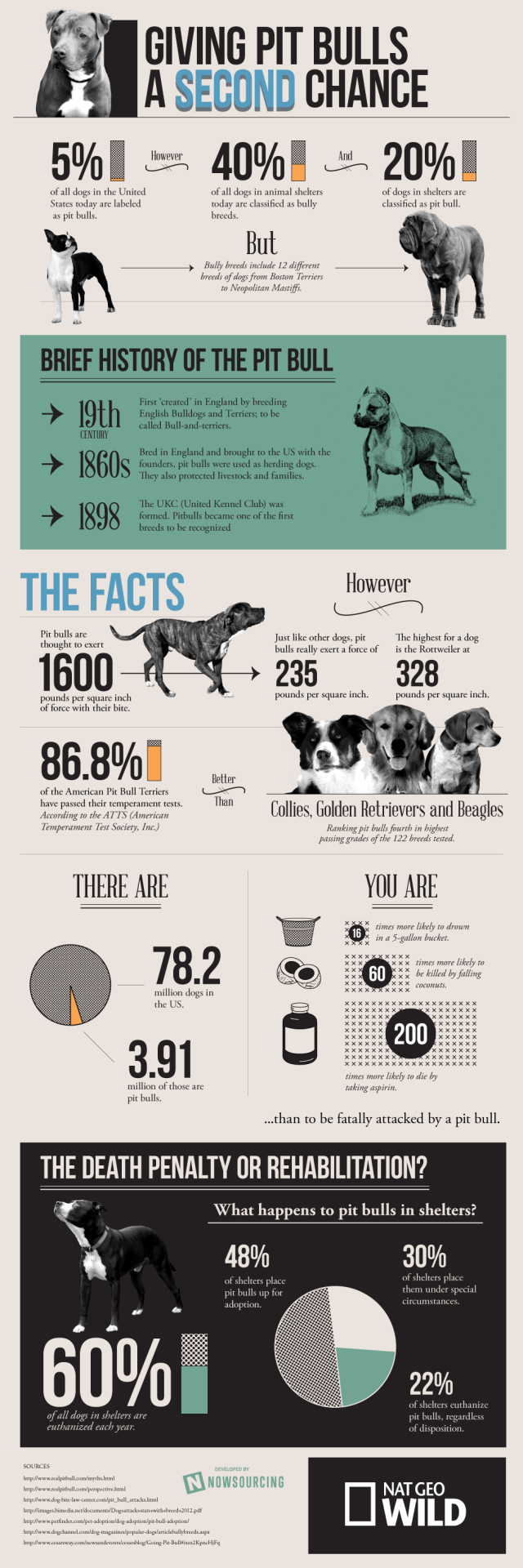 pit bull infographic primal canine dog training