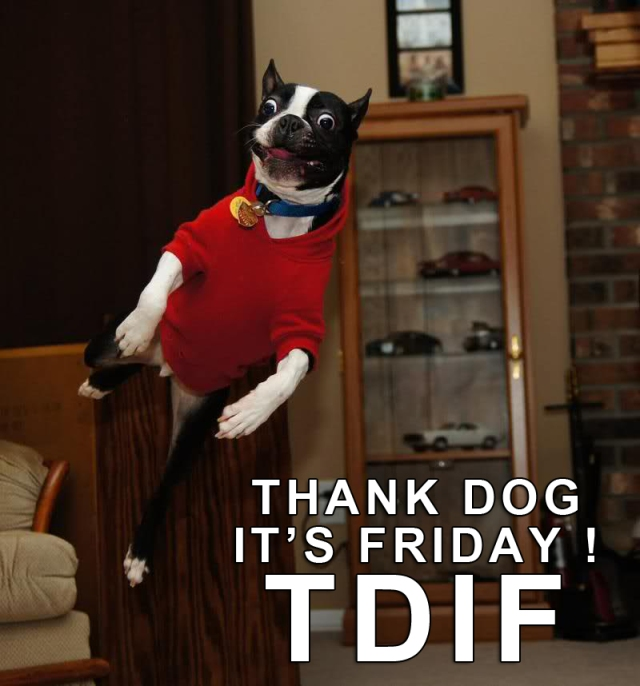 tgif primal canine dog training