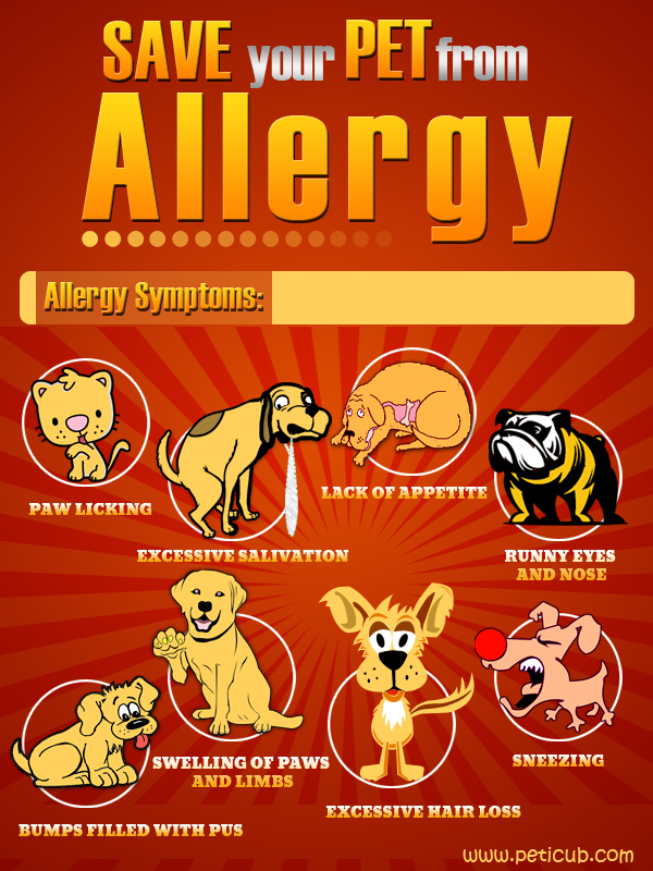dog allergies primal canine san jose dog training