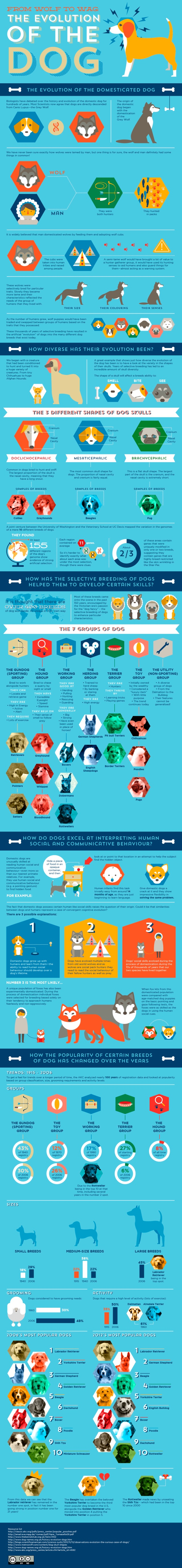 evolution of dogs primal canine dog training