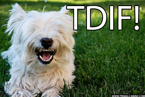 primal canine dog training TDIF