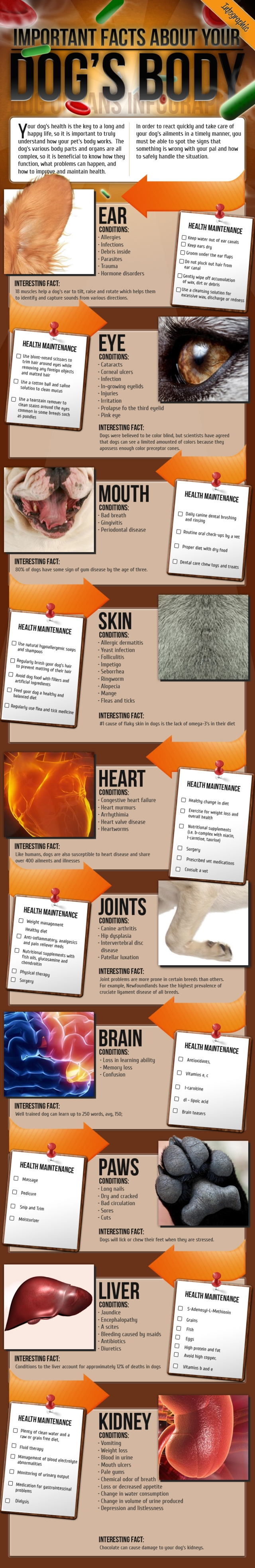 your dogs body infographic primal canine dog training