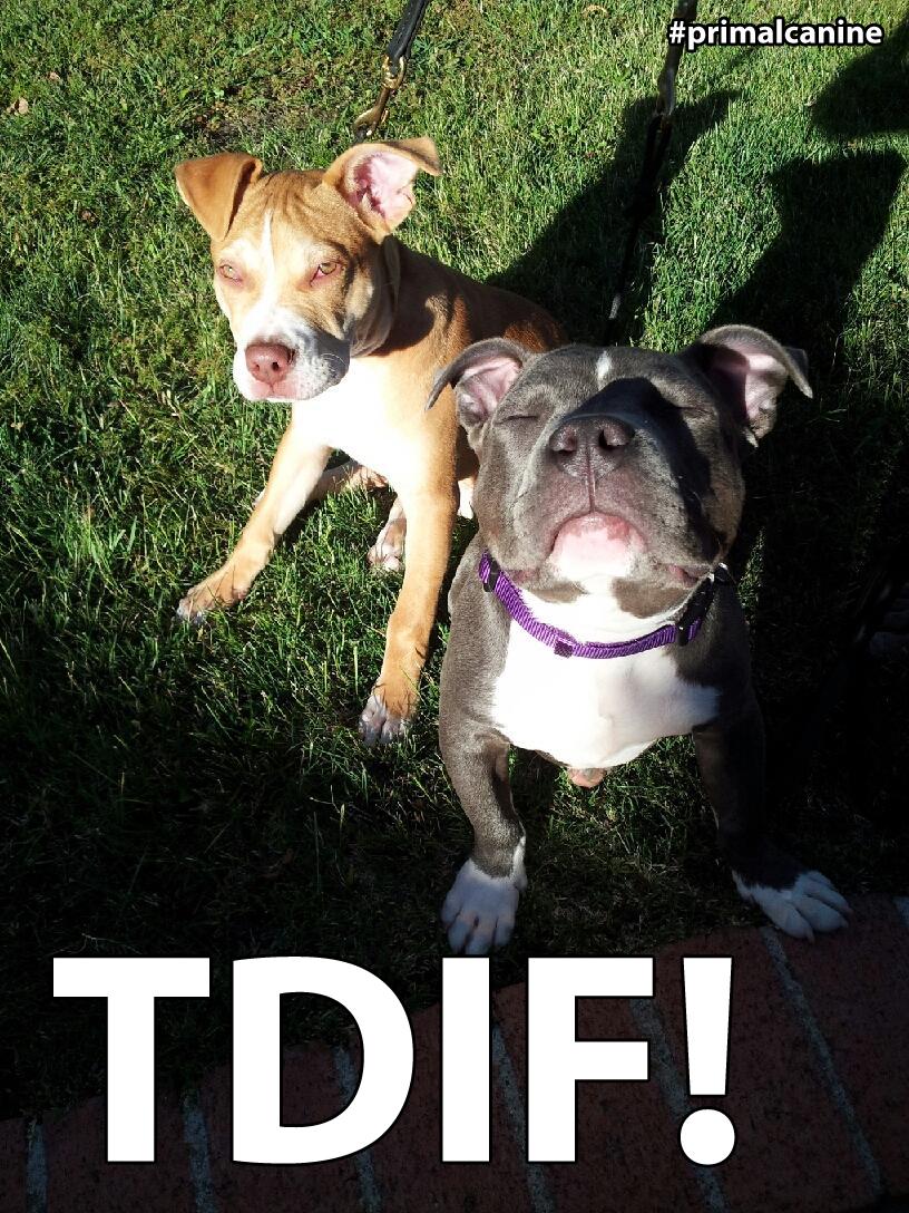 primal canine bay area dog training tdif tgif