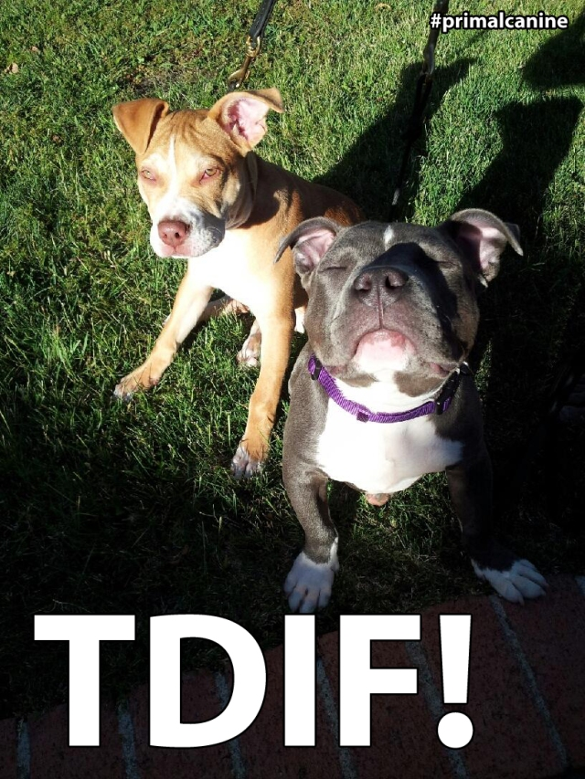 primal canine bay area dog training tdif tgif