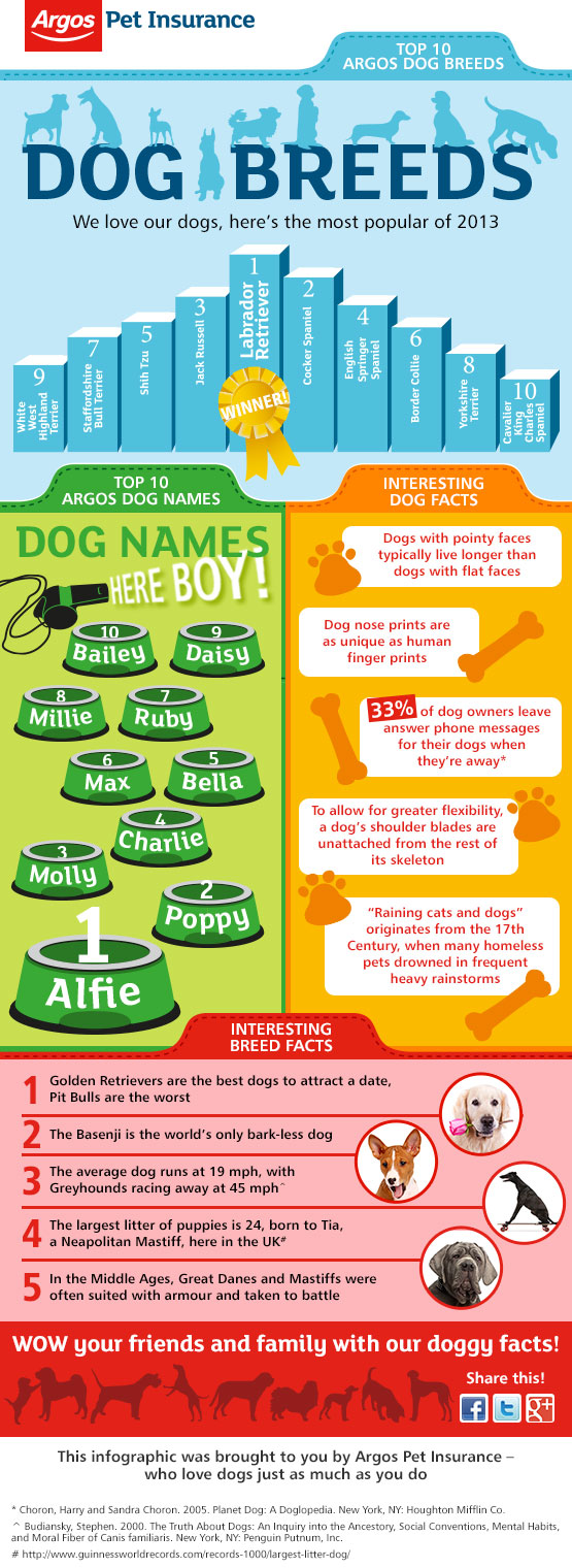 top-dog-names--breeds-in-2013_PRIMAL CANINE MORGAN HILL DOG TRAINING
