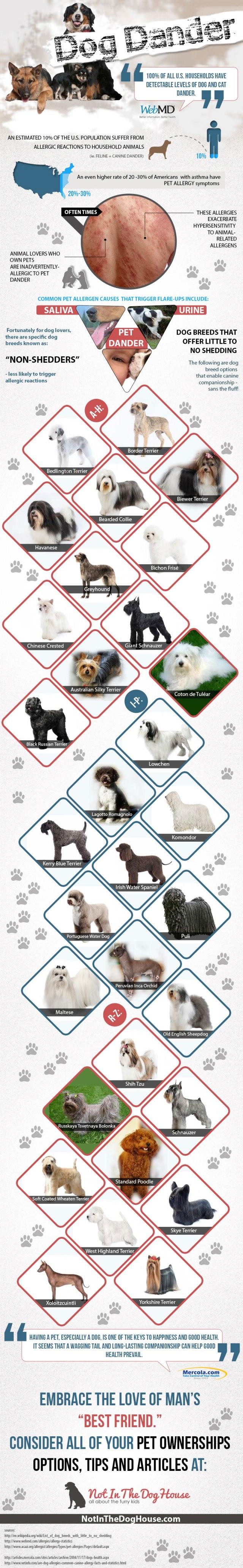 dog-dander_PRIMAL CANINE BAY AREA DOG TRAINING